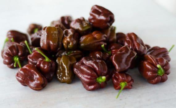peperoncini habanero chocolate