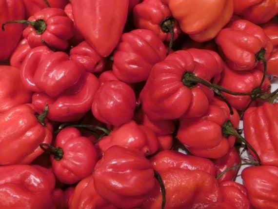 peperoncino habanero rosso
